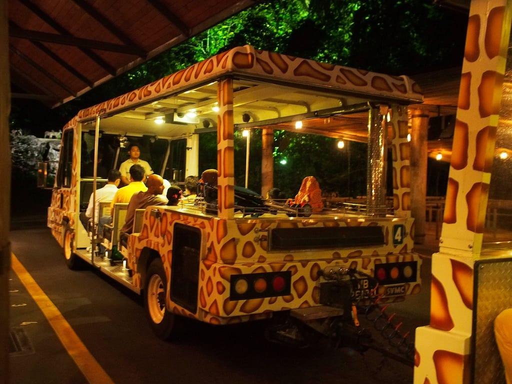 singapore night safari là một trong những điểm đến ở singapore cho hội độc thân