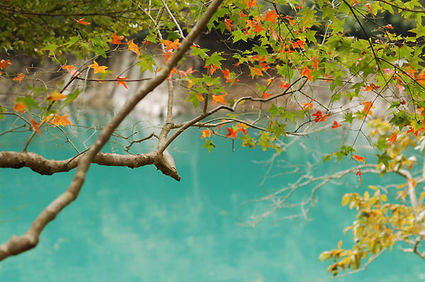 ngắm lá phong ở đài loan: đập thủy điện shihmen