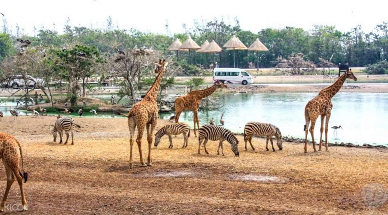 ghé safari world là một trong những hoạt động ở bangkok không thể bỏ qua