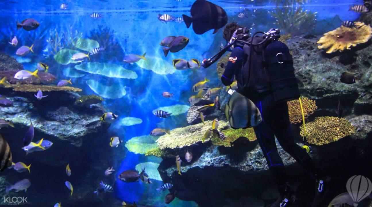ghé sea life bangkok ocean world là một trong những hoạt động ở bangkok