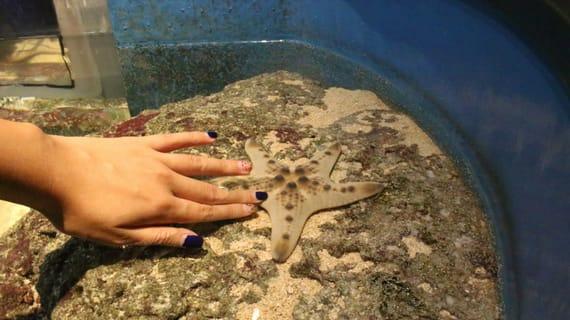 thăm touch pool tại sea aquarium là một trong những hoạt động tại singapore