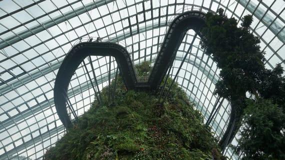 ngắm cây trong gardens by the bay là một trong những hoạt động tại singapore
