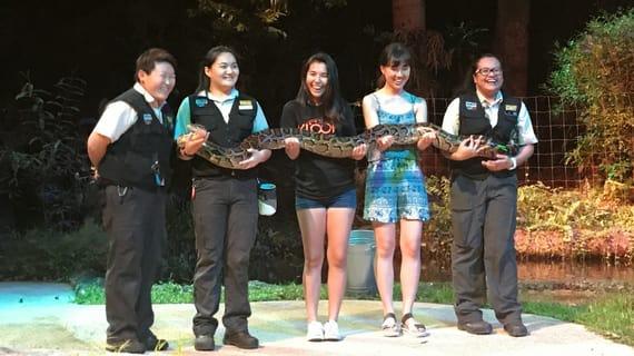 xem trăn tại night safari là một trong những hoạt động tại singapore