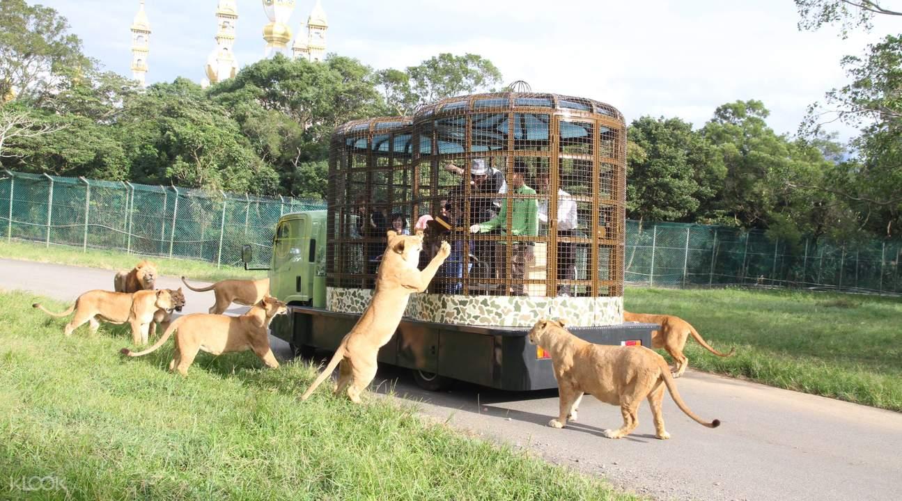 vui chơi ở công viên giải trí leofoo village là một bí kíp du lịch đài loan