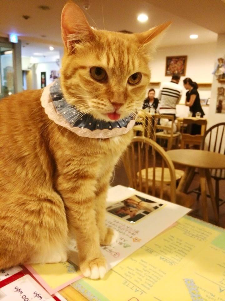 mua sắm ở myeongdong: Cat Playground