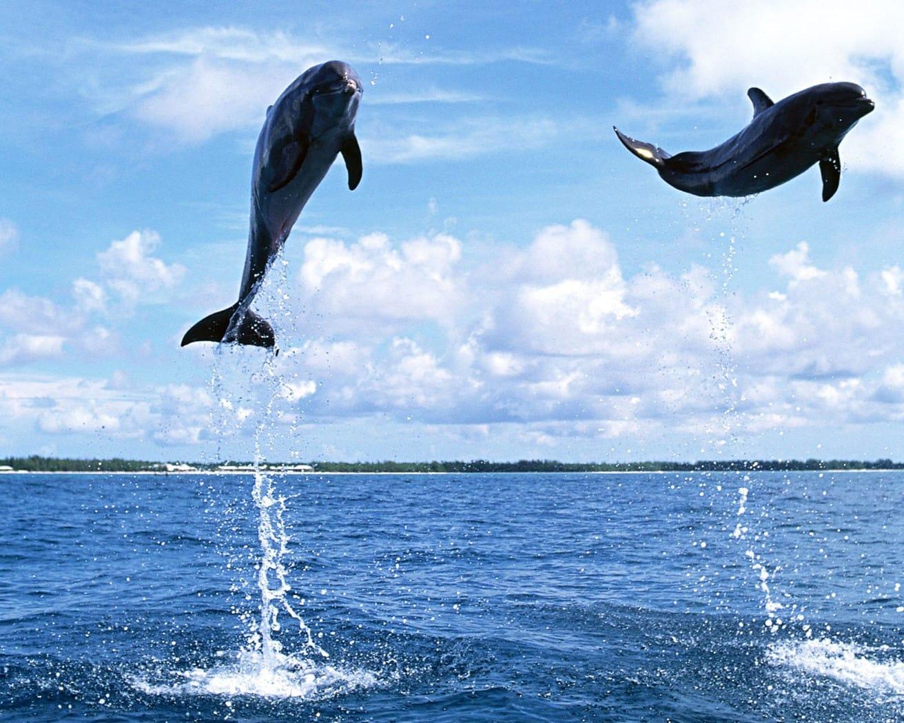 xem cá heo trong chuyến du lịch tự túc đài loan
