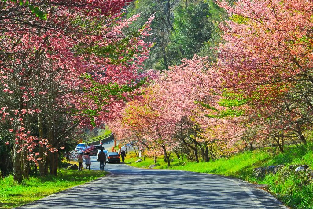 du lịch tự túc đài loan cùng lễ hội hoa ở yangmingshan
