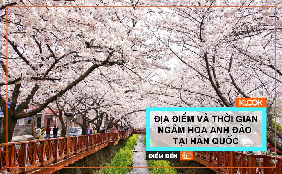 Địa điểm và thời gian lý tưởng ngắm hoa anh đào tại Hàn Quốc 1