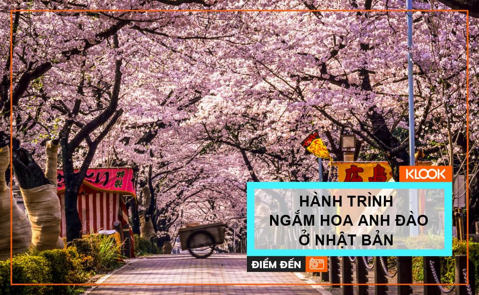 Hành trình ngắm hoa anh đào ở Tokyo, Kyoto, Hiroshima và Osaka 1