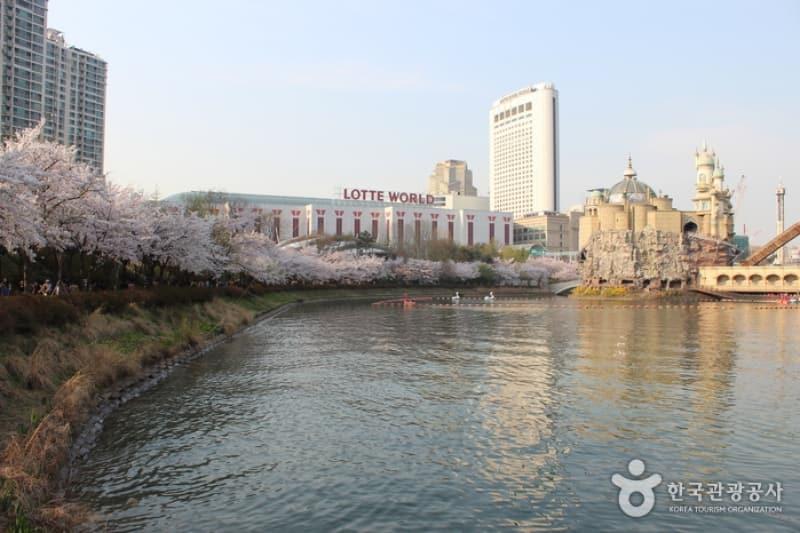 ngắm hoa anh đài tại hàn quốc tại lễ hội hoa anh đào hồ seokchon