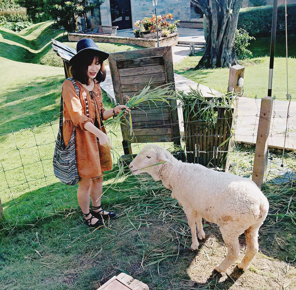 du lịch khao yai - cho cừu ăn ở primo piazza