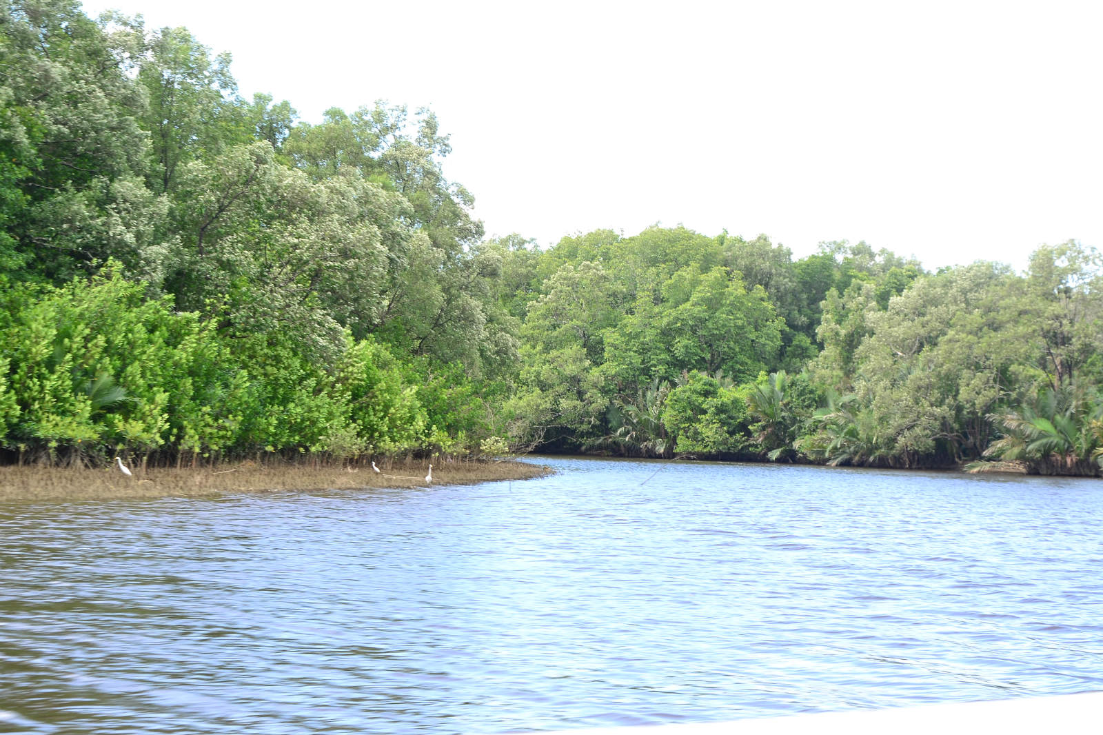 du lịch kota kinabalu - rừng ngập mặn