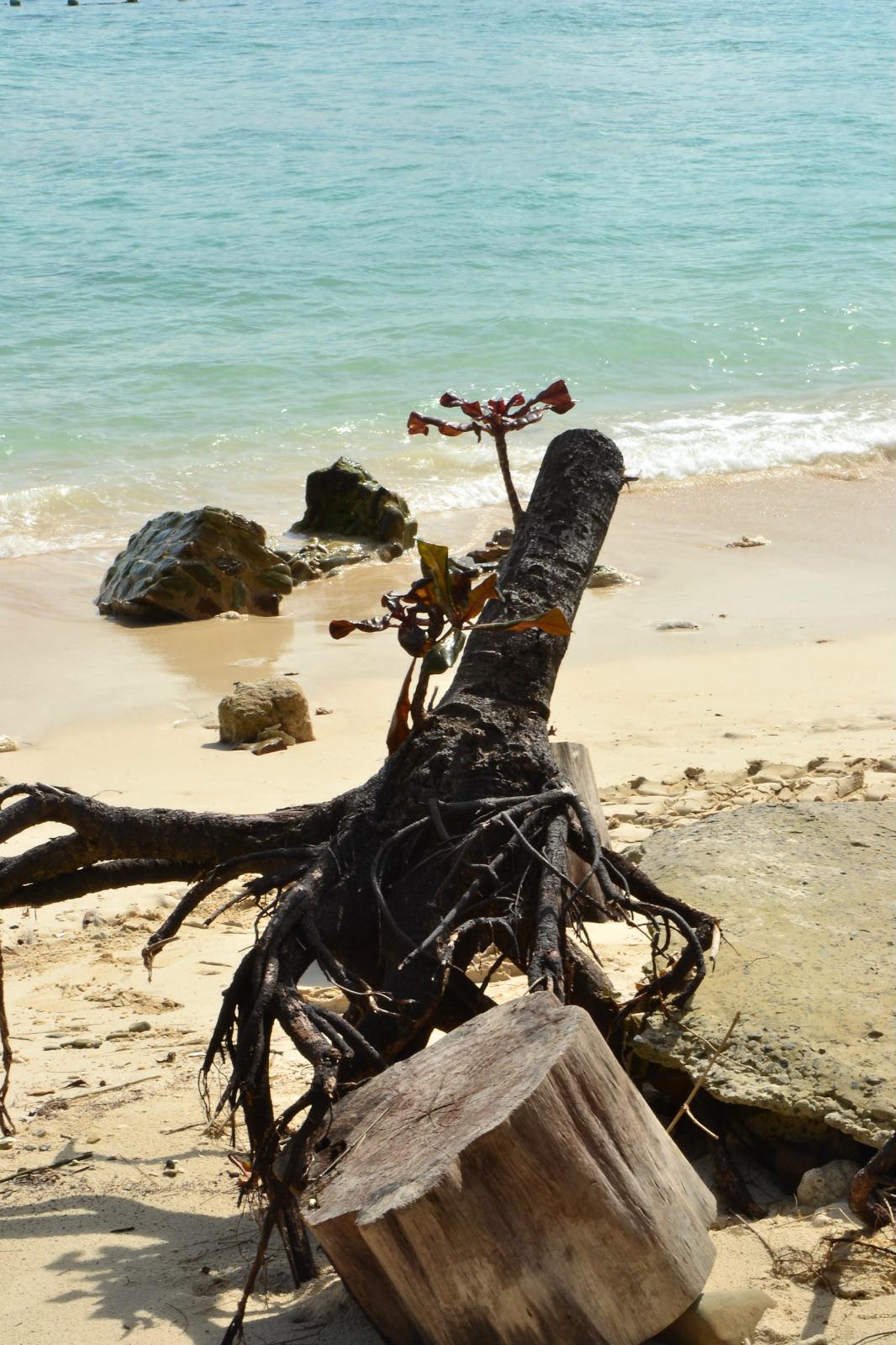 du lịch kota kinabalu - cảnh hoang sơ ở bãi biển