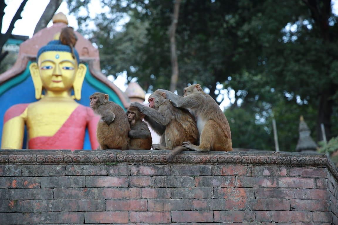 du lịch nepal: Monkey Temple