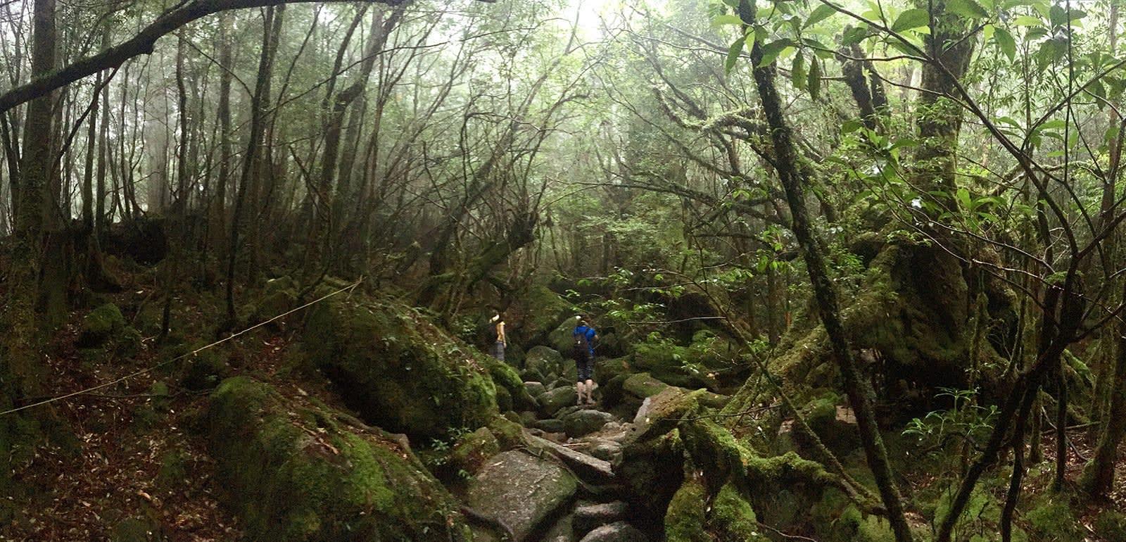 du lịch yakushima - khám phá rừng theo cách riêng của bạn