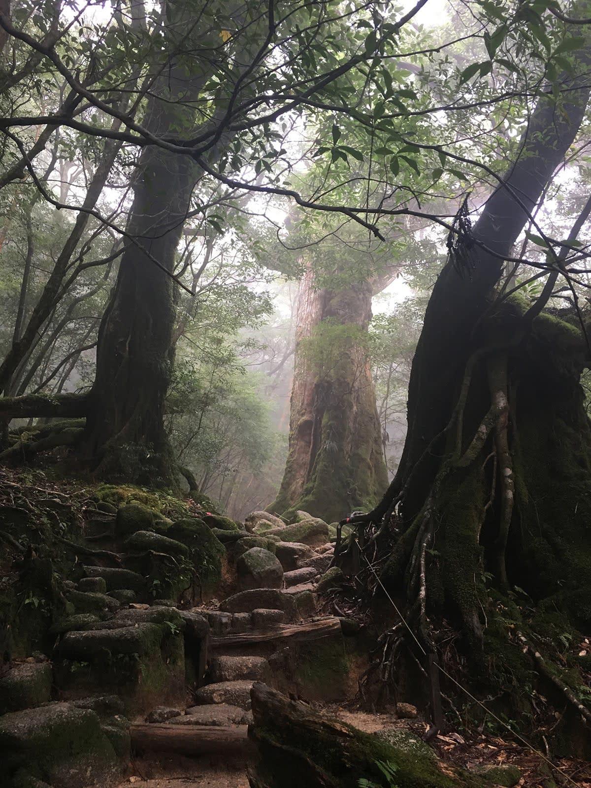 du lịch yakushima - hẻm núi của mây và nước