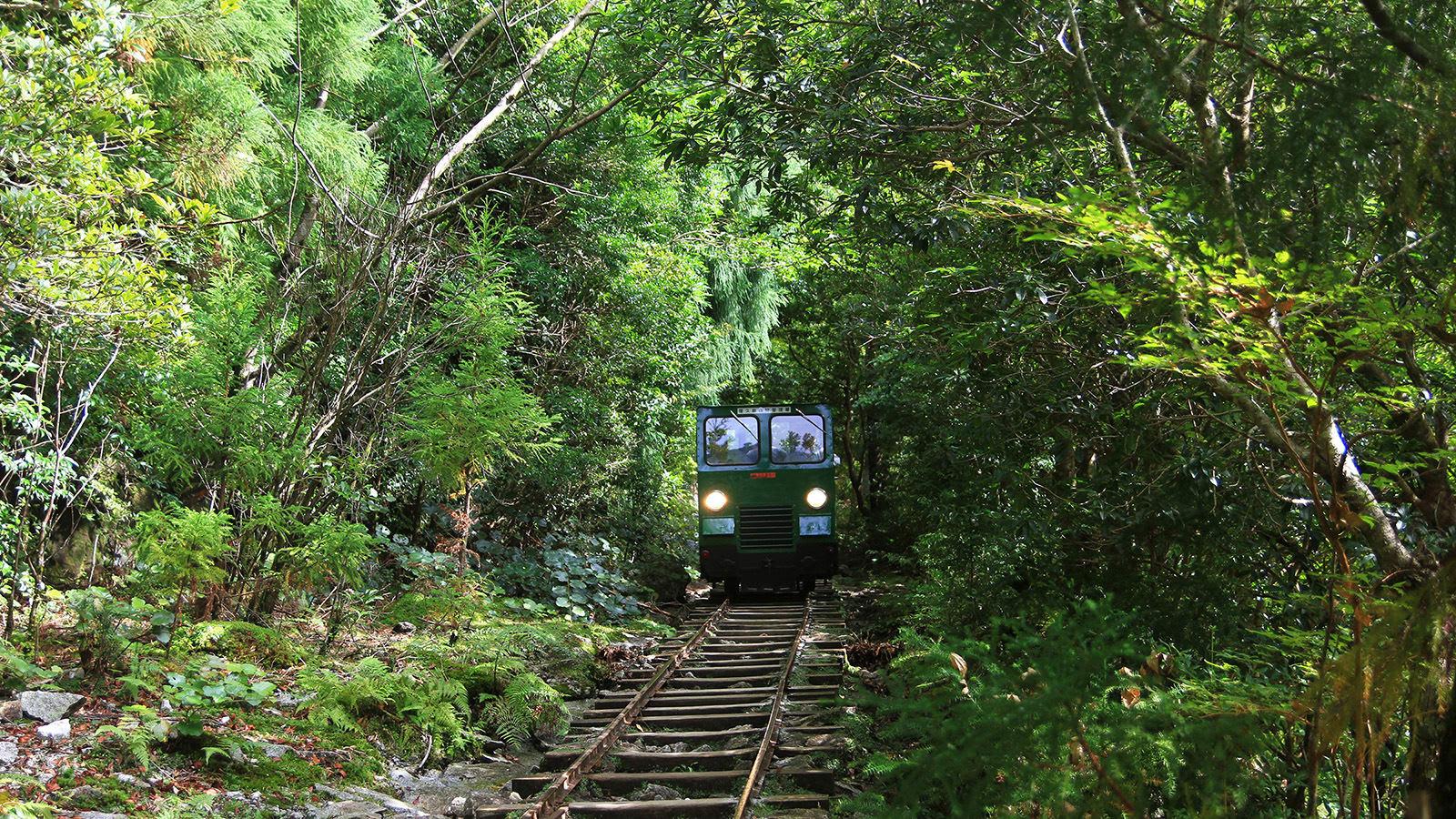 du lịch yakushima - tàu trong rừng
