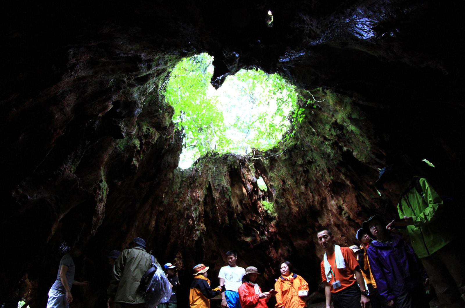 du lịch yakushima - gốc cây wilson