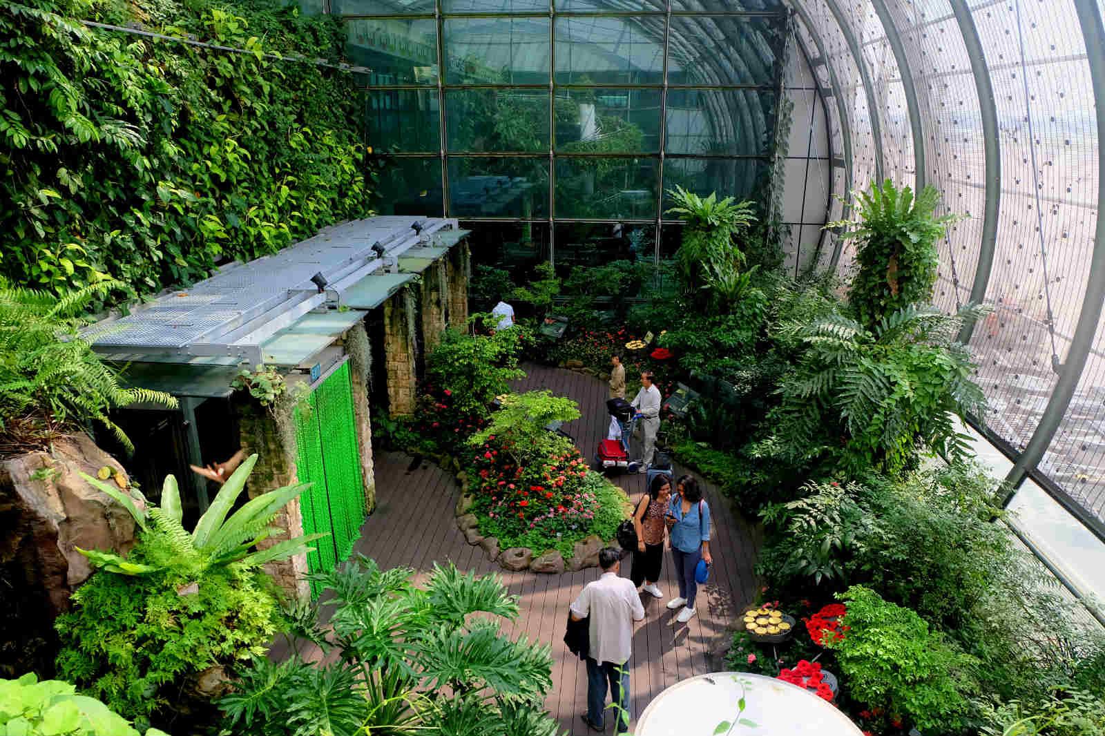 một mình ở singapore - vườn bướm