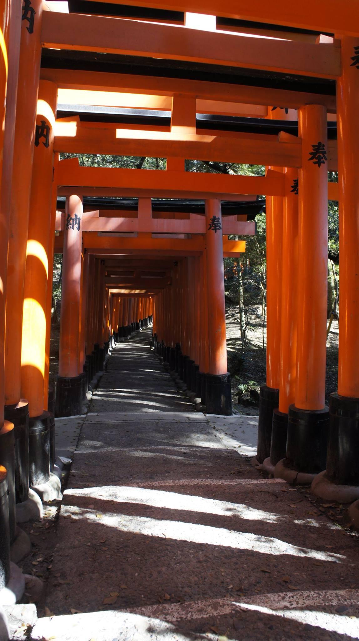 tổng torii là địa điểm thú vị trong chuyến ngắm hoa anh đào