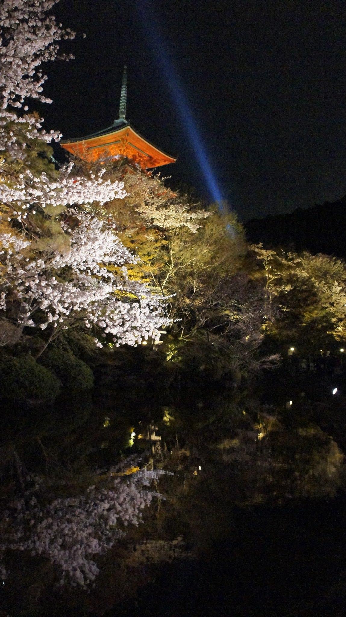 ngắm hoa anh đào tại chùa kiyumizu
