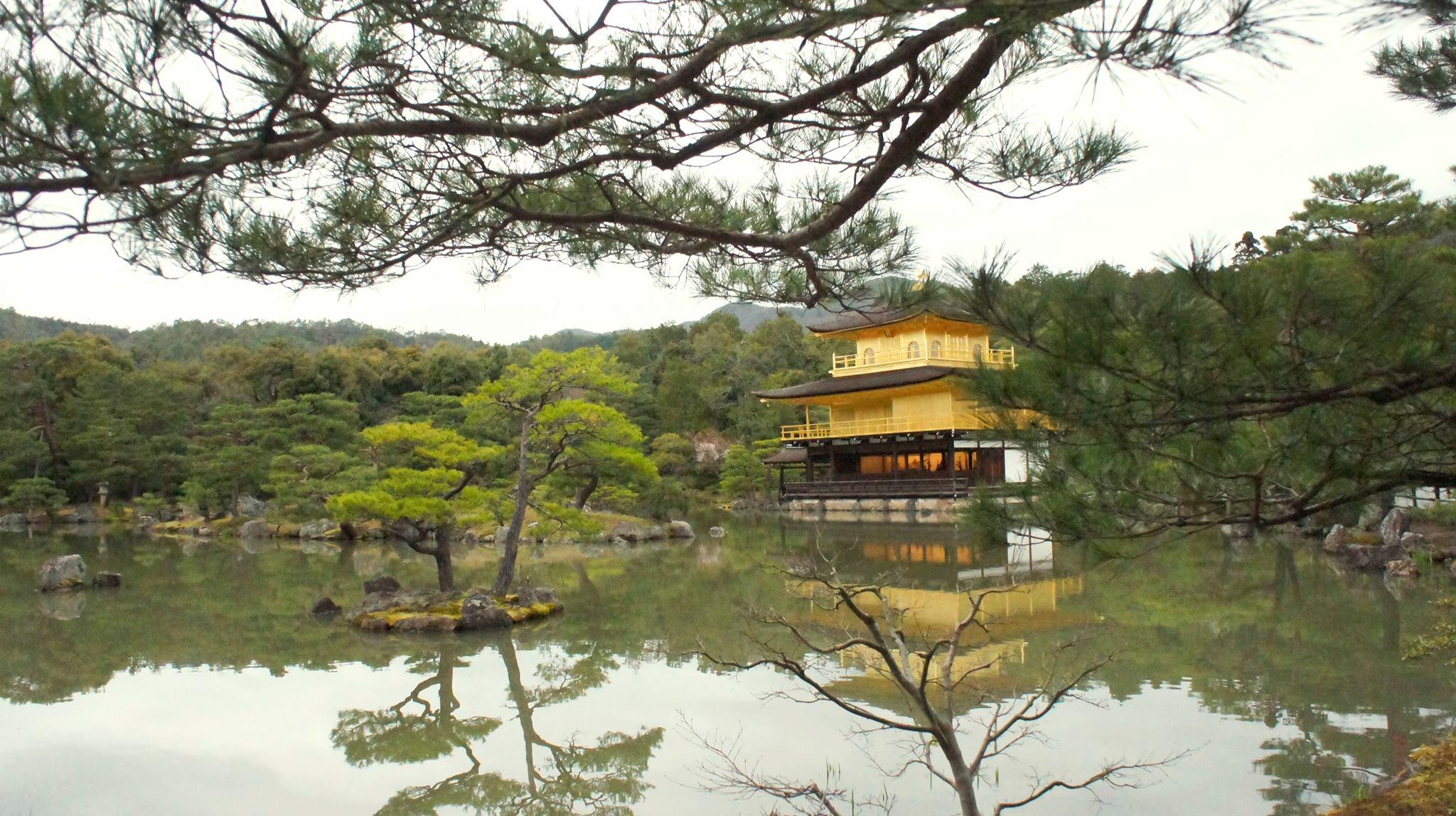 kinkakuji là địa điểm đáng đến trong chuyến ngắm hoa anh đào