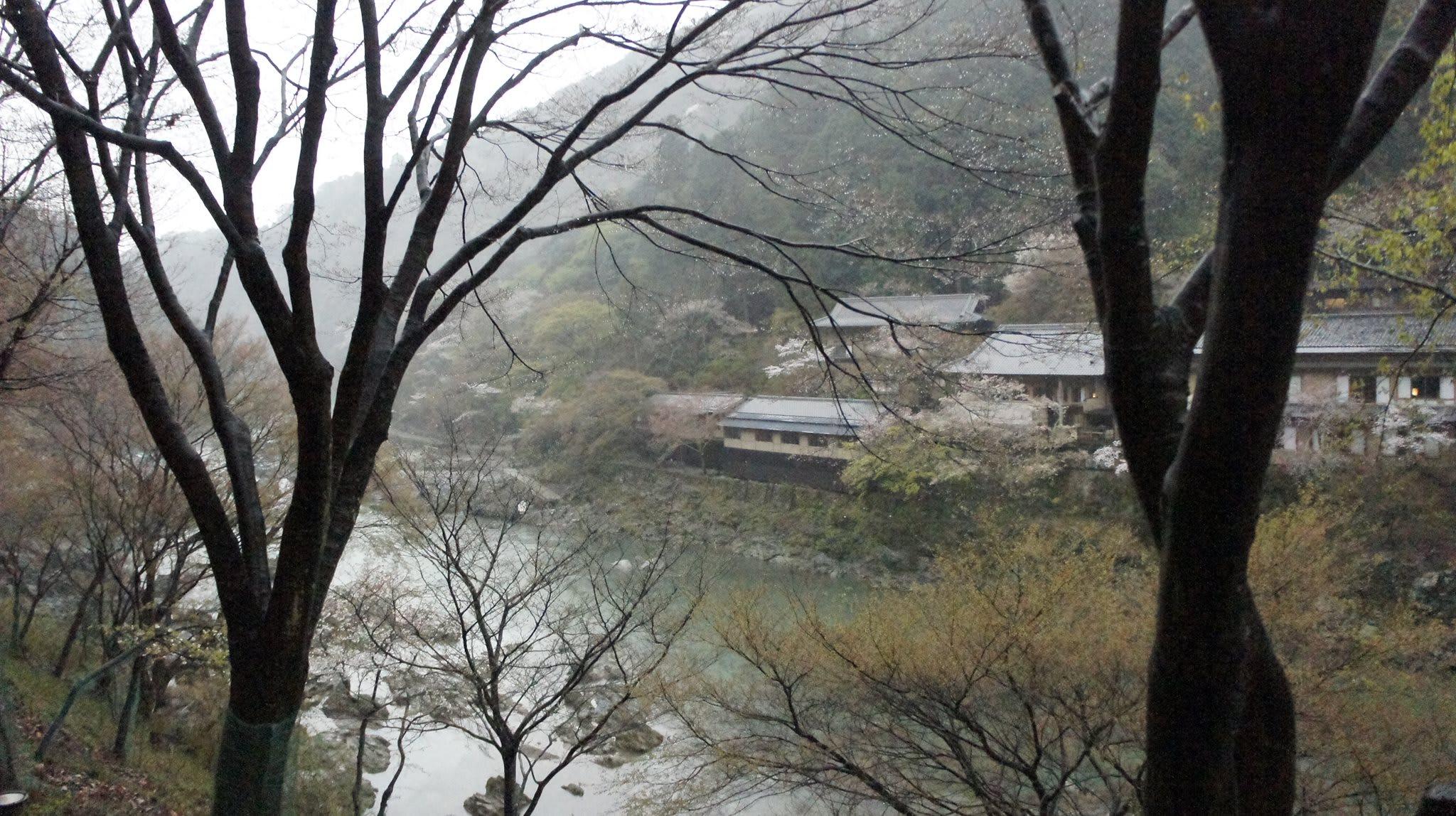 ngắm hoa anh đào ở công viên maruyama