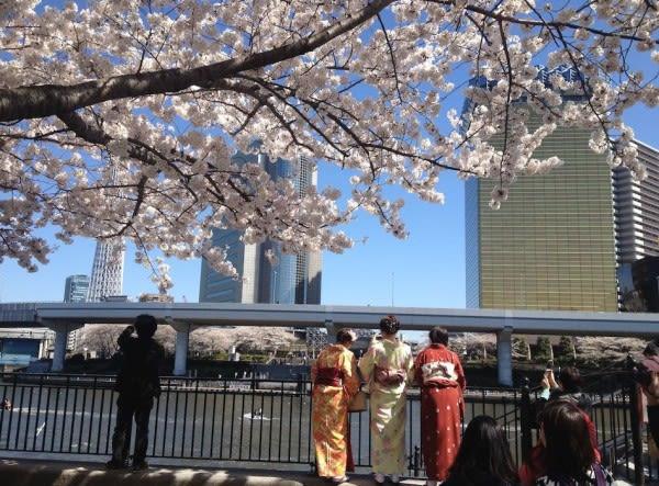 hoạt động săn hoa anh đào ở nhật bản: thuê kimono