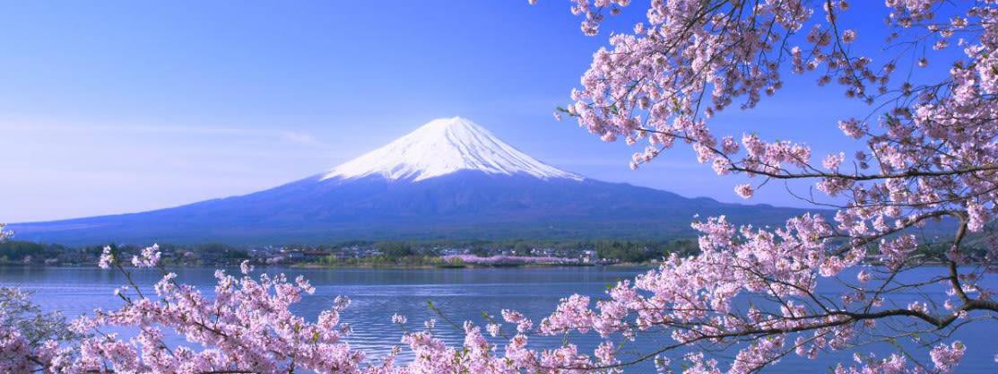 hoạt động săn hoa anh đào ở nhật bản: tour cáp treo núi kachi kachi