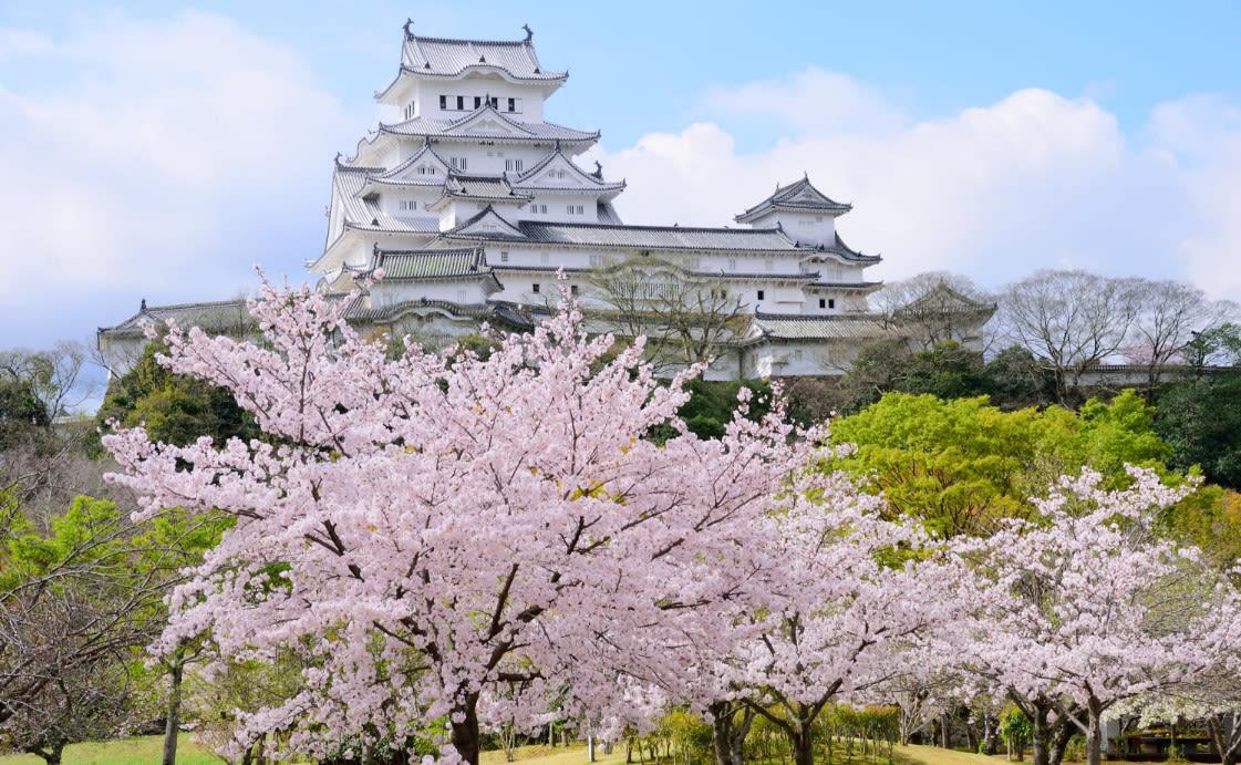 hoạt động săn hoa anh đào ở nhật bản: ngắm hoa anh đào ở thành tokyo odawara