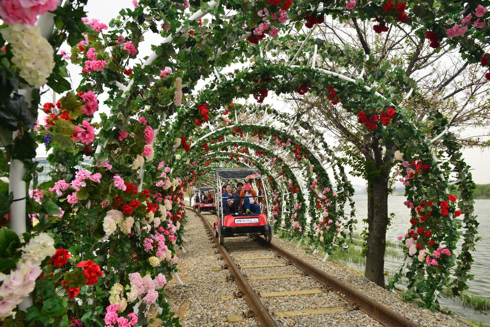 hoạt động săn hoa anh đào ở hàn quốc: đường sắt uiwang