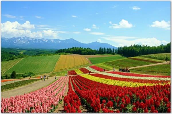 lễ hội hoa ở ta shee blooming oasis là một trong những lễ hội hoa ở đài loan