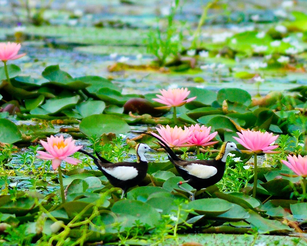 mùa hoa sen ở tainan là một trong 5 lễ hội hoa ở đài loan