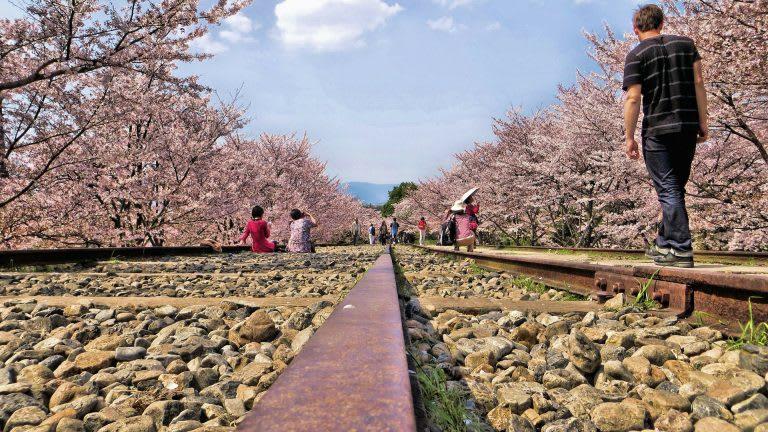 Năm 2018 ngắm hoa anh đào Nhật Bản thì đi thành phố nào và thời gian nào? 2