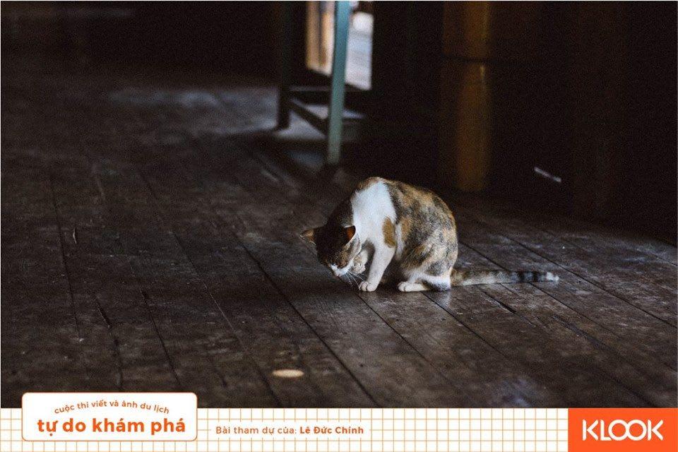 một góc chùa mèo trong chuyến du lịch inle