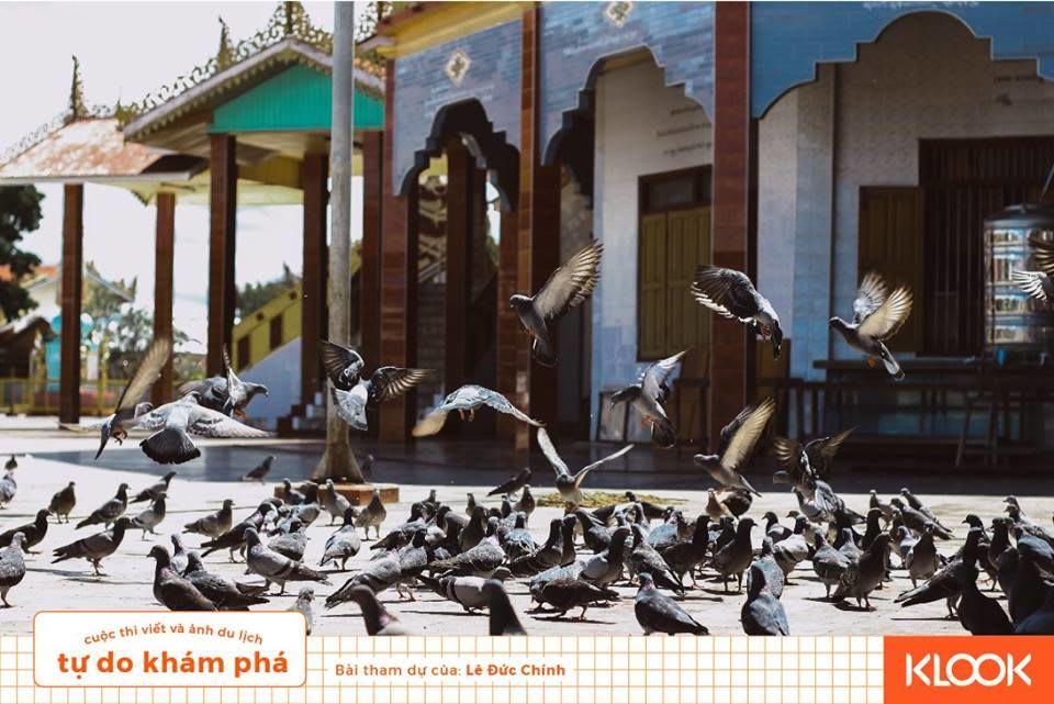 sân chim bồ câu ở chùa mèo trong chuyến du lịch inle