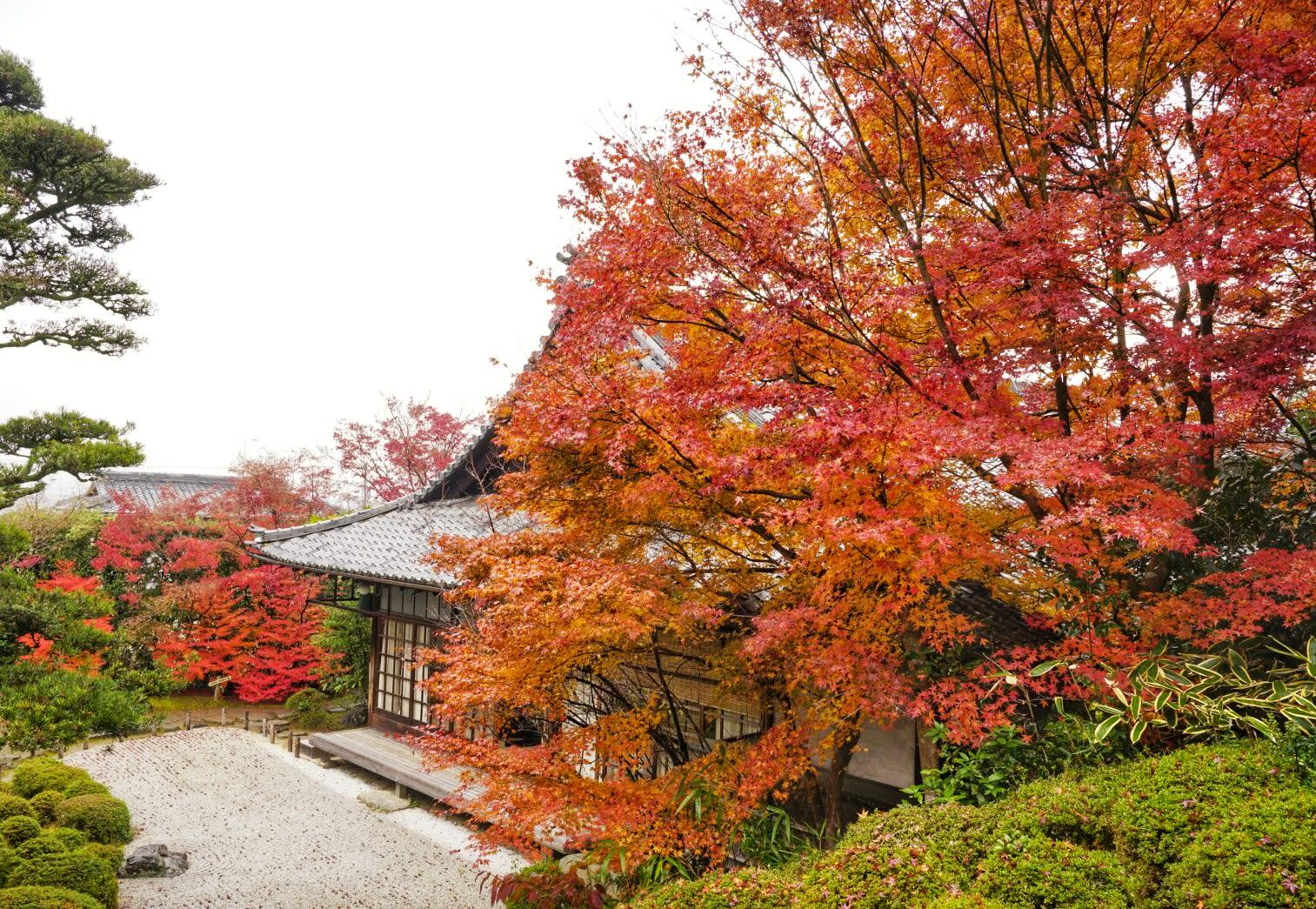 ngôi chùa là điểm đến chính trong lịch trình ngắm mùa thu ở kyoto