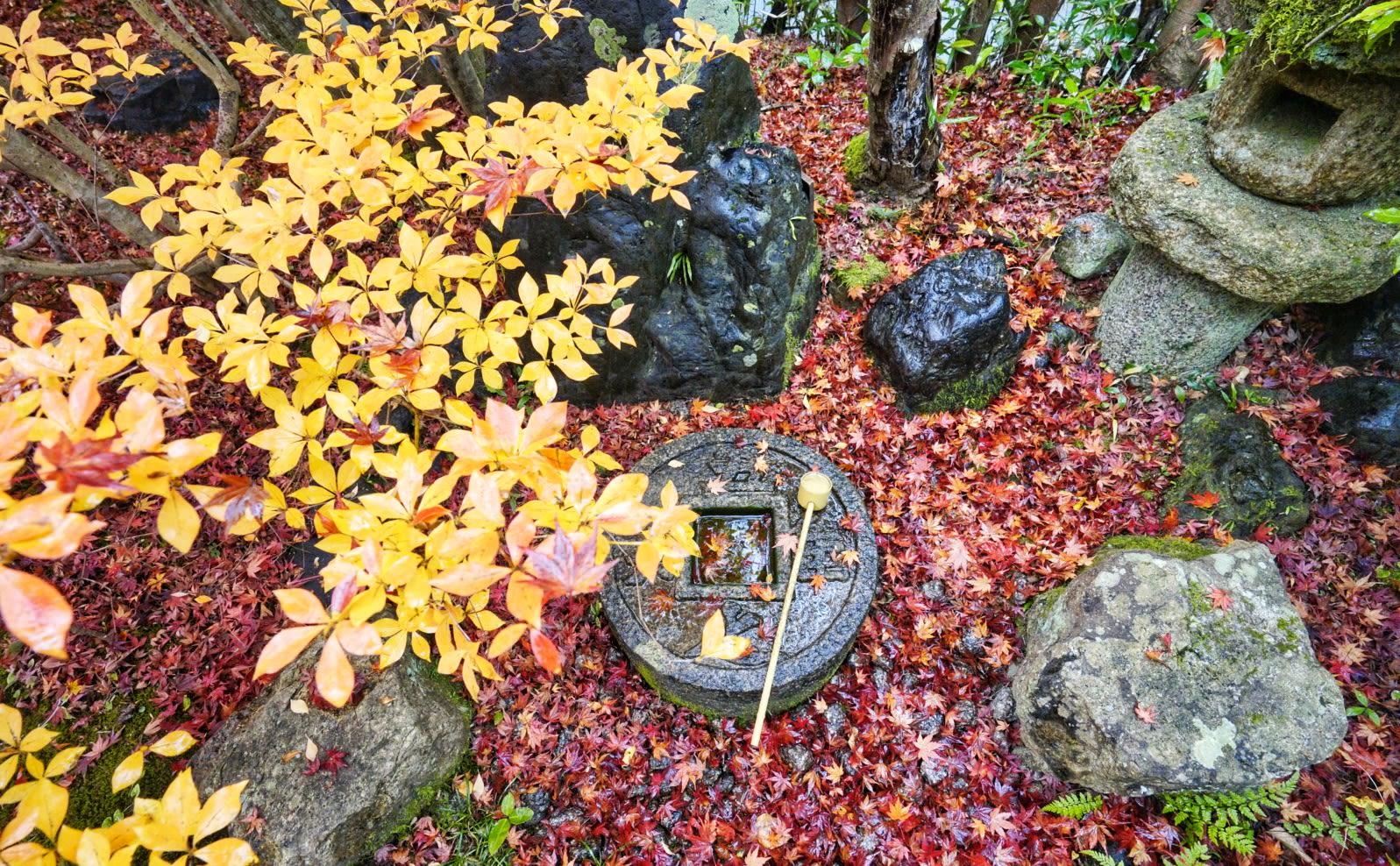 ngắm lá đỏ ở chùa trong lịch trình ngắm mùa thu ở kyoto