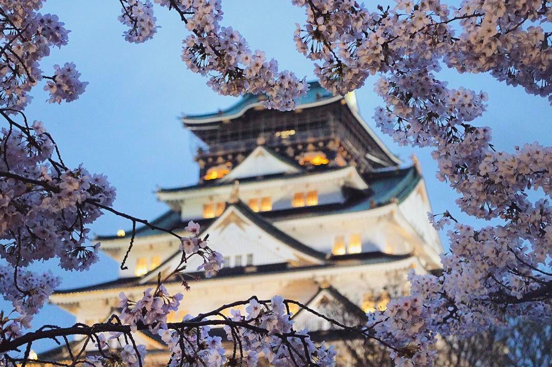lâu đài osaka là một địa điểm ngắm hoa anh đào