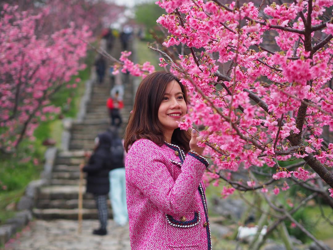 lâu đài nakijin là một địa điểm ngắm hoa anh đào tại okinawa