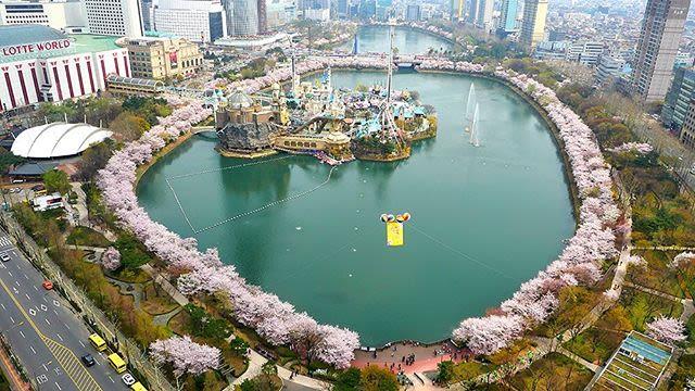 hồ seokcheon là một địa điểm ngắm hoa anh đào