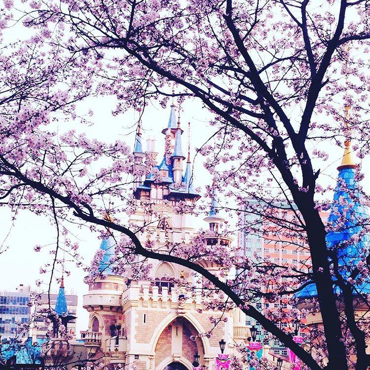 lotte world là một địa điểm ngắm hoa anh đào ở seoul