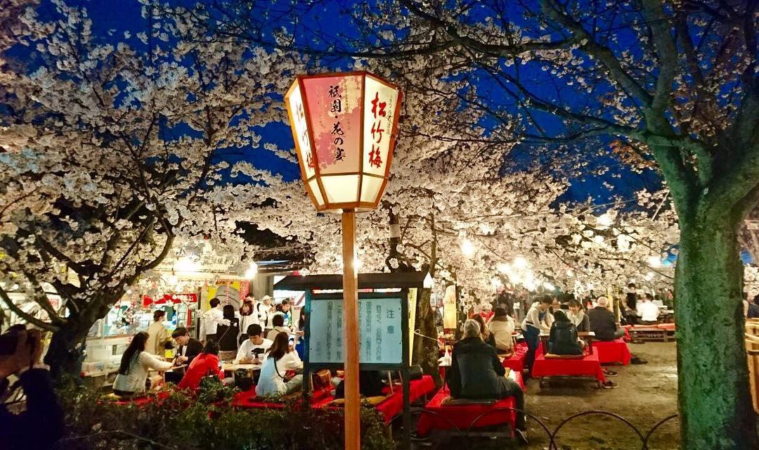 công viên maruyama là một địa điểm ngắm hoa anh đào