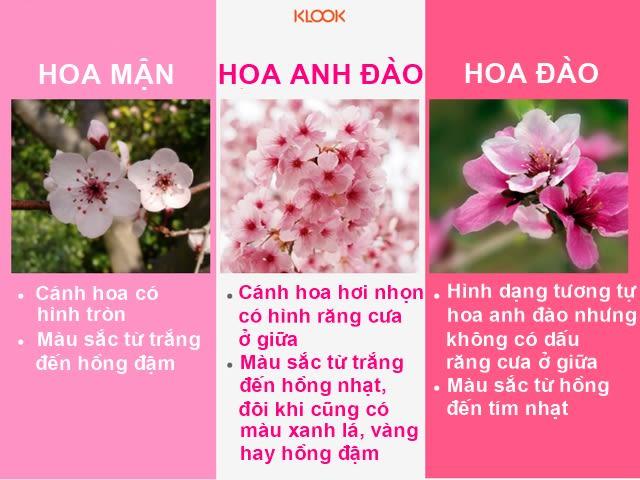 các loại hoa trong lễ hội hoa anh đào nhật bản