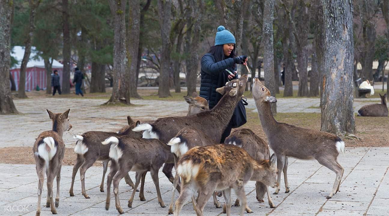 đến vườn hươu nara trong lịch trình du lịch osaka bằng JR pass