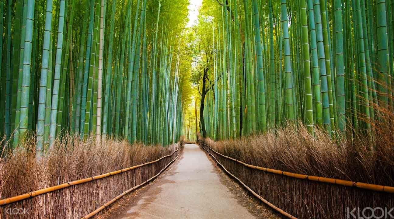 rừng tre là một nơi rất đẹp trong lịch trình du lịch osaka bằng JR pass