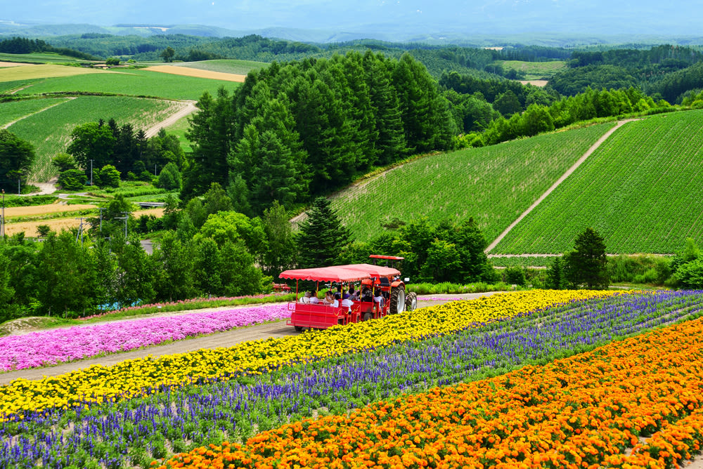 ghé trang trại hoa ở shikisai trong lịch trình du lịch sapporo bằng JR Pass