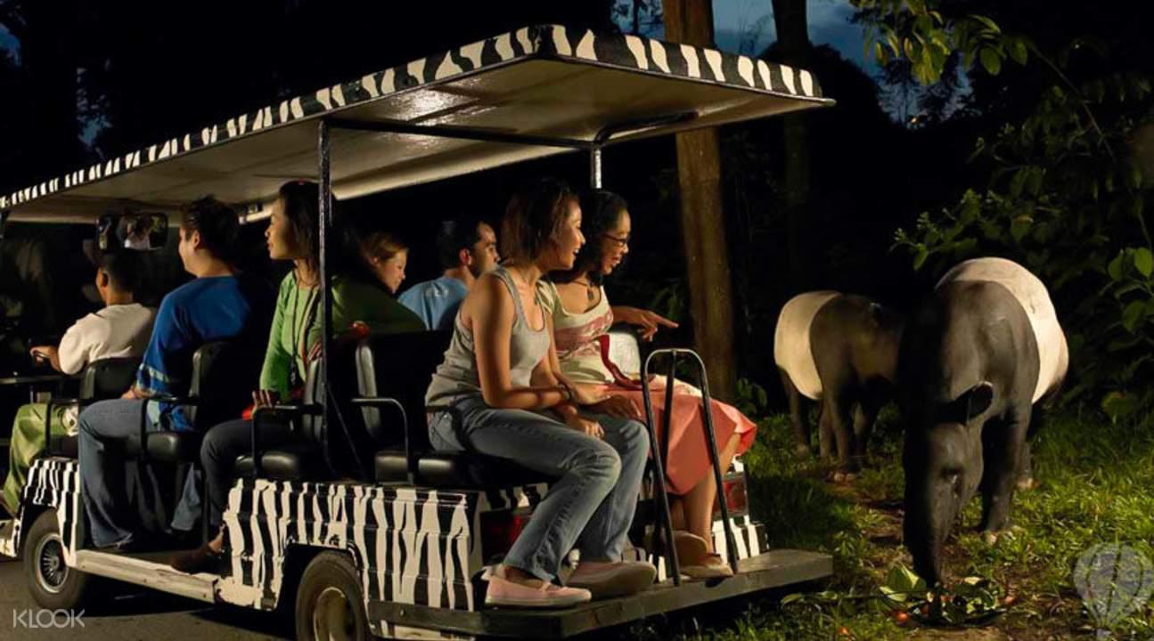 phiêu lươu tại night safari trong lịch trình du lịch singapore 3 ngày dành cho gia đình