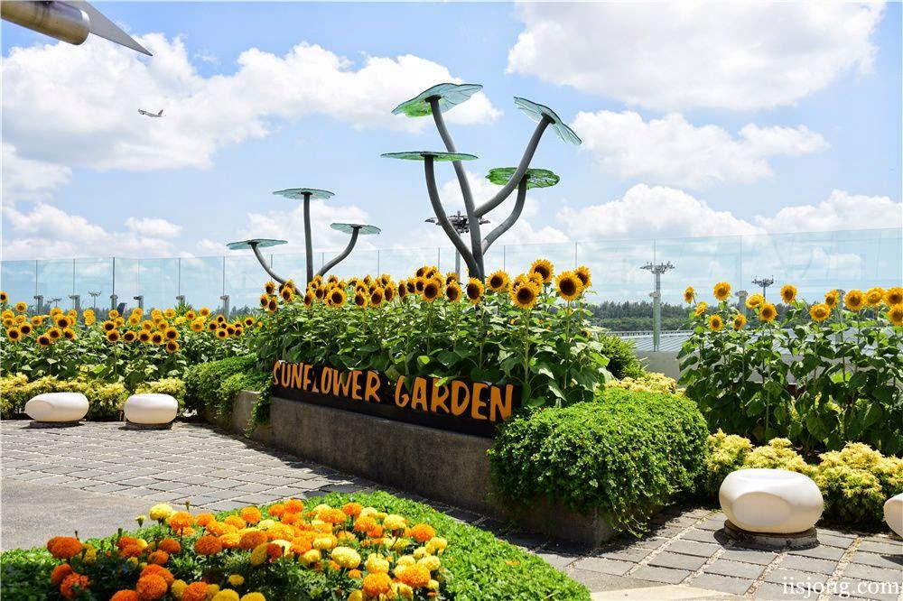 ngắm vườn hoa hướng dương tại sân bay changi trong lịch trình du lịch singapore - malaysia cho gia đình