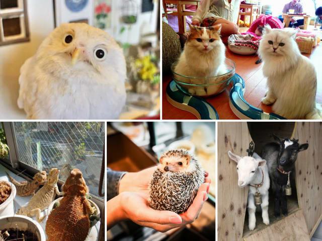 animal cafe là một trong 10 quán cafe ở nhật bản có phong cách độc đáo